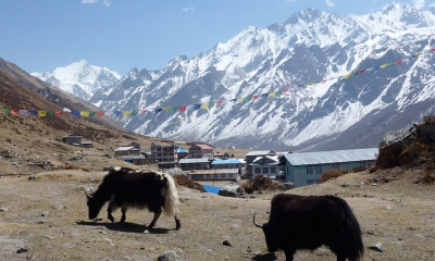 Langtang Trek and  Gosaikunda Darshan