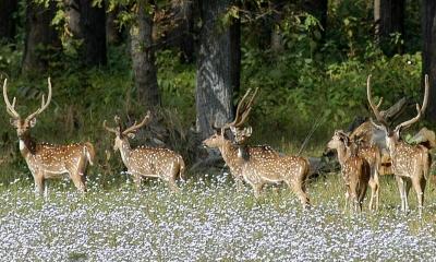 shuklaphanta wildlife reserve Safari
