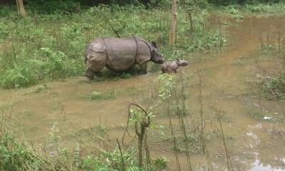 Kathmandu, Pokhara & Chitwan Jungle Safari 7N & 8D