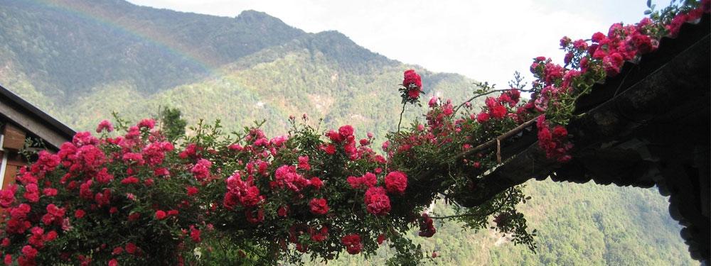Annapurna Area